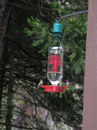 Yosemite Big Creek Inn: We loved to observe the hummingbirds at the patio feeder.
