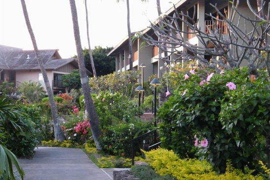 Napili Kai Beach Resort: the garden