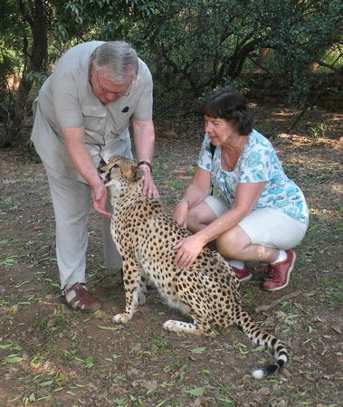 Gauteng, Sudáfrica: Cheetahs have rough tongues - but they're friendly souls