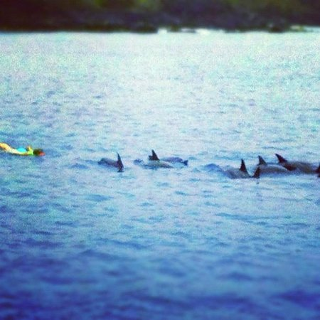 Kawaihae, HI: That's me! Those are the dolphins!