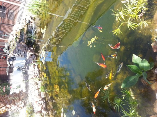 Americas Best Value Inn: Koi pond in the courtyard!