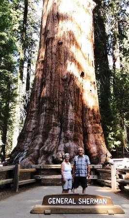 Dinuba, CA: Sequoia Park - General Sherman