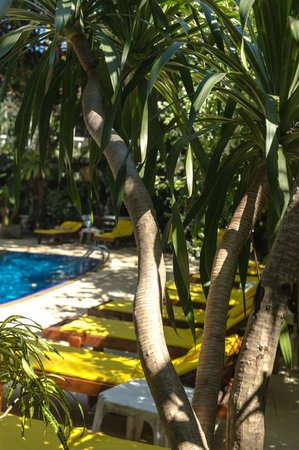 Tropica Bungalow Hotel: Tropica Pool and trees