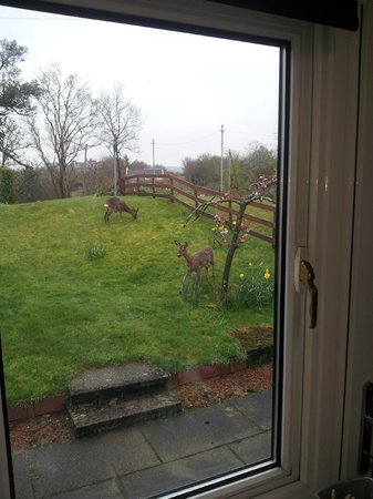 Avoncraig B&B: Deer in garden 2013