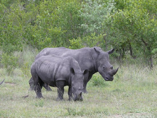 Elephant Plains Game Lodge: Rhino...