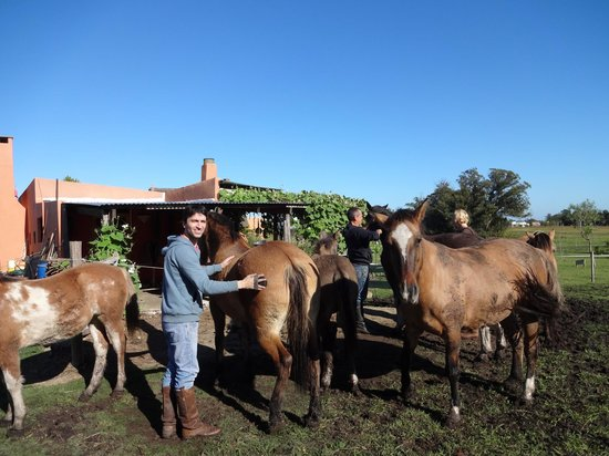 El Galope Hostel & Farm: Cavalos