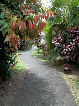 Volcano Lodge & Gardens : trail through gardens