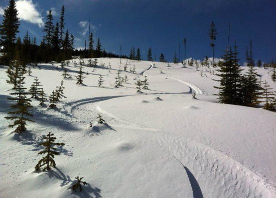 Lac La Hache, Canada: fresh powder