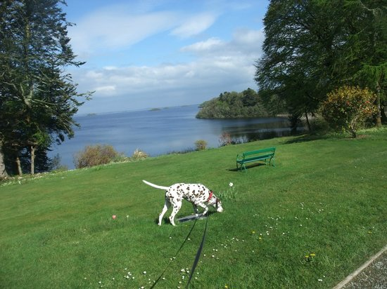 Oughterard, Irlande : Bran the dog enjoying sun in Connemara (Lough Corrib)