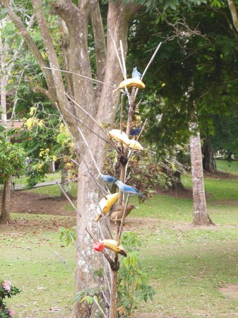 Tilajari Hotel Resort: birds at breakfast