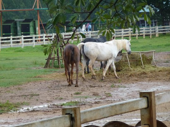 Pak Chong, Thailand: horse park