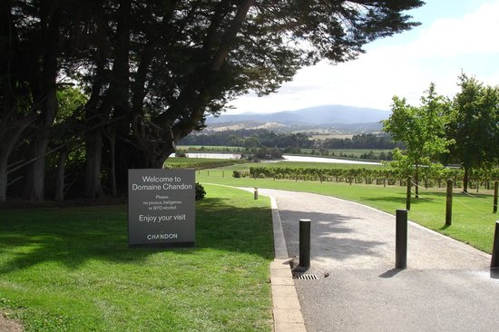 Chirnside Park, Australia: Nearby winery