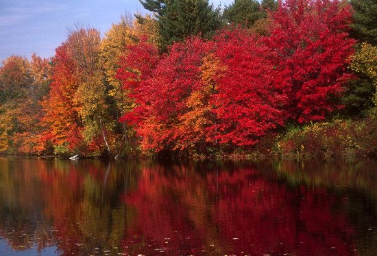 Holderness, NH: Foliage