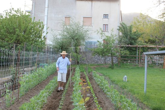 Agerola, : Roberto&#39;s father taking care  for fresh vegetables