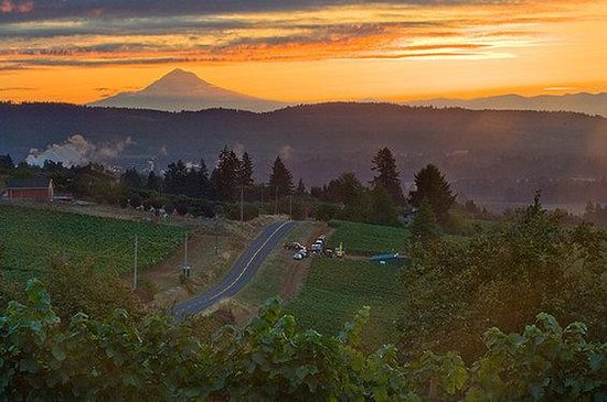 Albany, Oregn: Oregon Wine