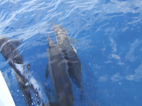 Chaaya Lagoon Hakuraa Huraa: dolphins