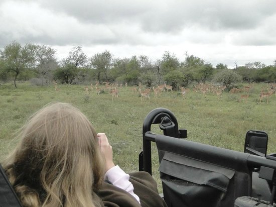 Tinga Private Game Lodge: no safari