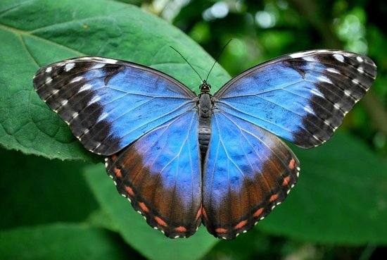 Photo of Butterfly World
