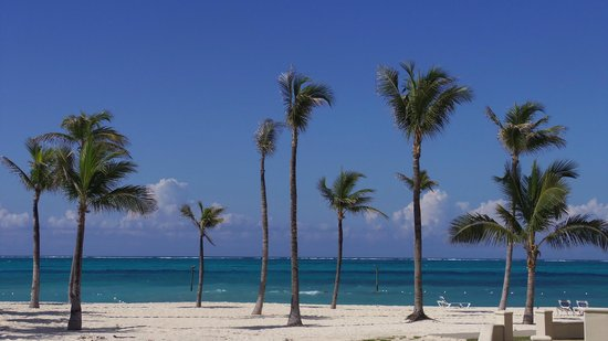 Sheraton Nassau Beach Resort & Casino: Palms