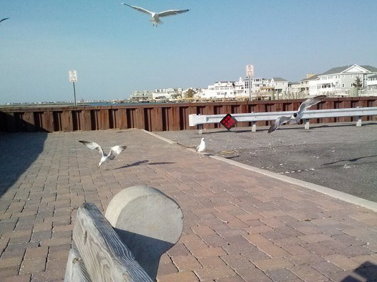 Jersey Shore (Atlantikkste von New Jersey), NJ: seagulls