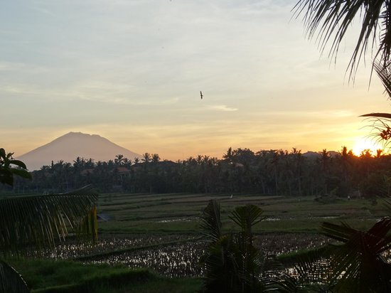 Alam Jiwa: Sunrise from balcony