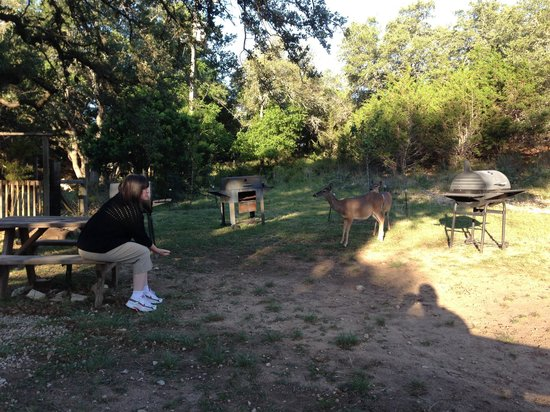 Canyon Lake, TX: Feeding deer