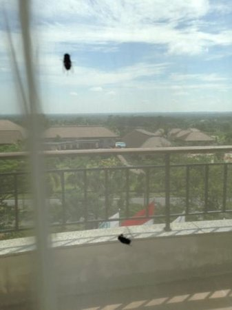 Pekanbaru, Indonesia: Found 10 -15 flies on our room