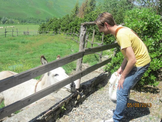 Peccioli, Italy: Luca and the farm donkey