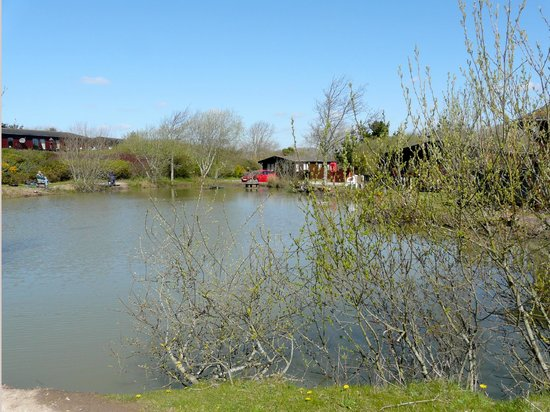 Fishing lake picture of shorefield country park milford for Milford lake fishing report