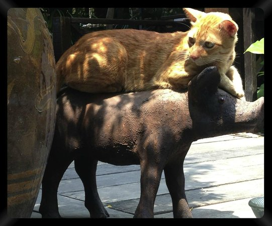 Nonthaburi, Tayland: our lovely cat on piggy