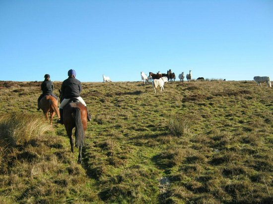 Abergavenny, UK: Wild ponies on top of the mountain!