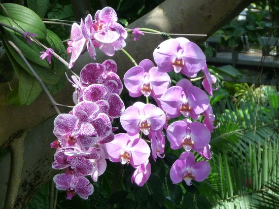 Galveston Island, TX: Orchids