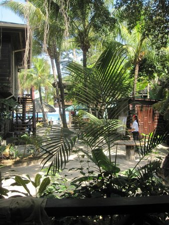 Bananarama Beach and Dive Resort: The garden view from our room out to the ocean.
