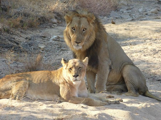 Kambaku Safari Lodge: Couple on their honeymoon