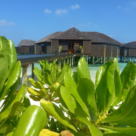 Lily Beach Resort & Spa: spa