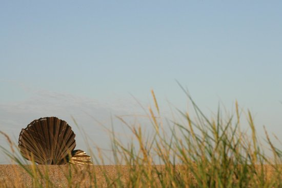 Aldeburgh, UK: Maggie Hambling&#39;s Shell Sculpture