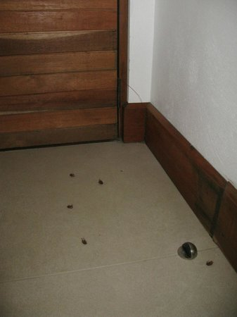 Altura Hotel: Bugs, more bugs beside the bed.