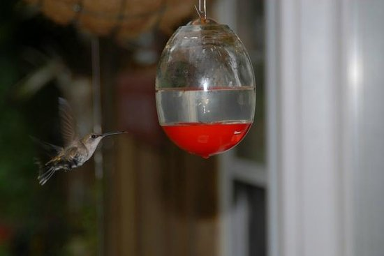 South Bloomingville, OH: Hummingbird Feeders at Each Cabin