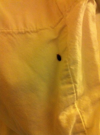 Comfort Inn & Suites Downtown: Uninvited Guests