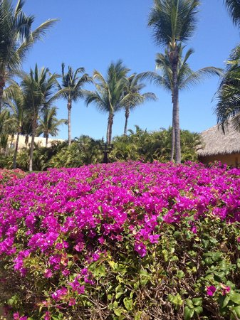 Four Seasons Punta Mita: Entrance to hotel spa