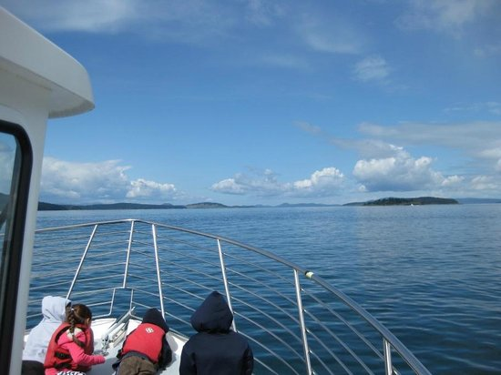 San Juan Islands, WA: Aussicht bei der Whale Watching Tour