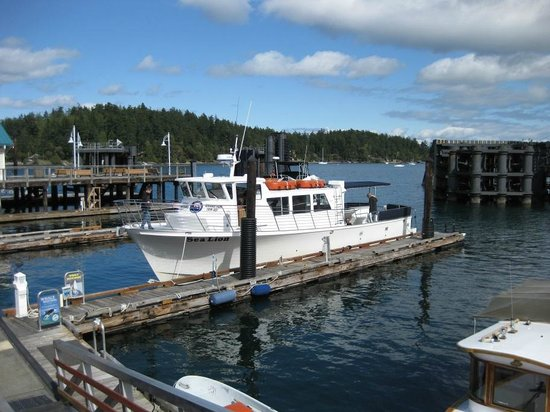 San Juan Islands, Etat de Washington : Whale Watching Boot &quot;Sea Lion&quot; 