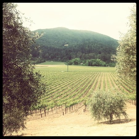 Rutherford, CA: Vineyards 2