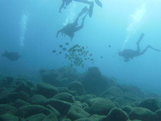 Koloa, HI: Great Dives