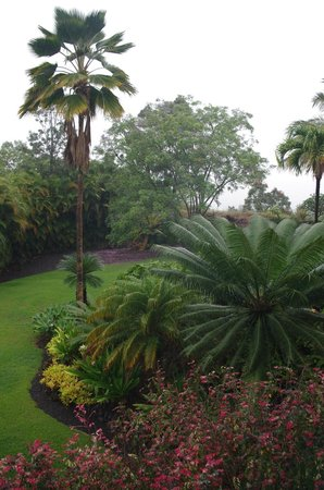 Areca Palms Estate Bed and Breakfast: view from the lanai - rainy morning
