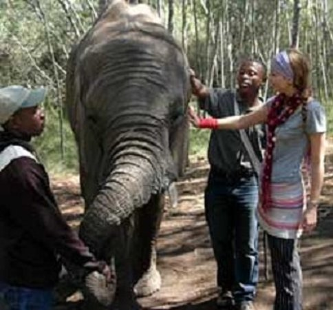Storms River, แอฟริกาใต้: Activities - Crags Elephant Sanctuary