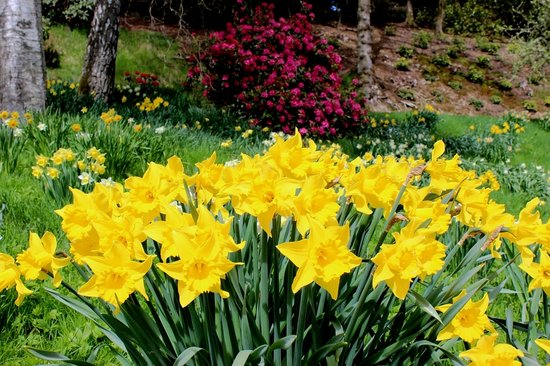 Selkirk, UK: Spring Colour at Bowhill