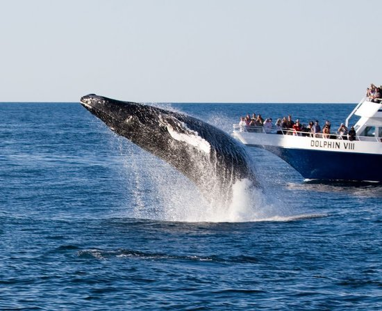 Cape Colony Inn: Whale Watching