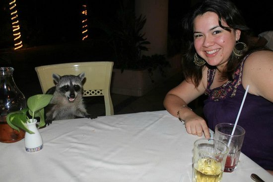 Bel Air Collection Xpu Ha Riviera Maya: Cenando con un amigo mapache