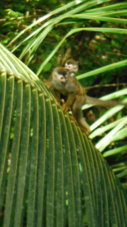 "Hotel Plaza Yara: ""Monkeys in the backyard"""